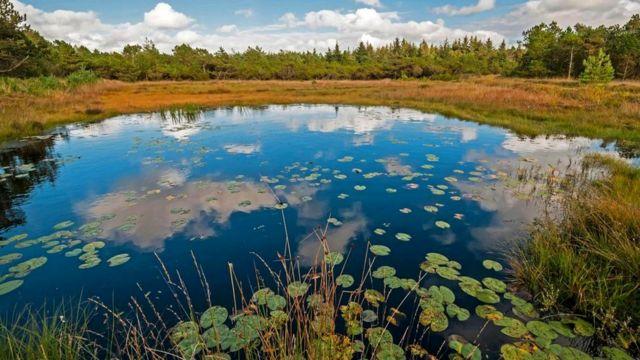 Водно-болотные угодья Казахстана нуждаются в защите