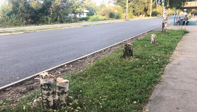В ВКО нарушают правила посадки деревьев: как решить проблему?